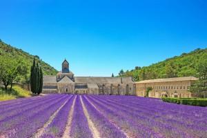 France-Provence-Abbey of Senanque,lavender