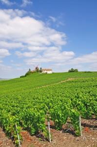 France-Champagne region-Verzenay-vineyards