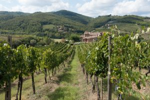 The hills of Chianti are blanketed in vineyards