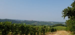 Spectacular views walking through the wineries of Piedmont