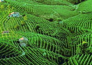 The rolling Prosecco hills ofConegliano-Valdobbiadene, UNESCO World Heritage Listed